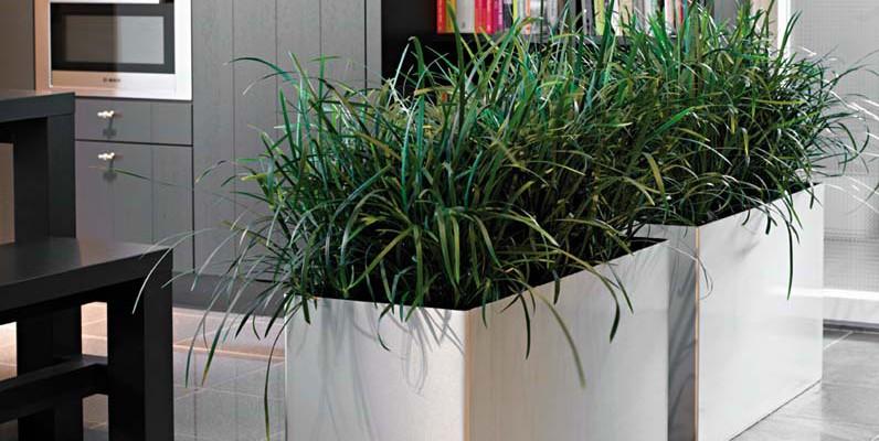 Büropflanzen mieten Büropflanzen kaufen