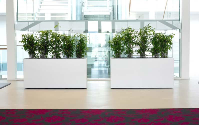 Büropflanzen Slider 8