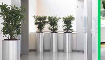 Büropflanzen mieten Pflanzen mieten oder kaufen