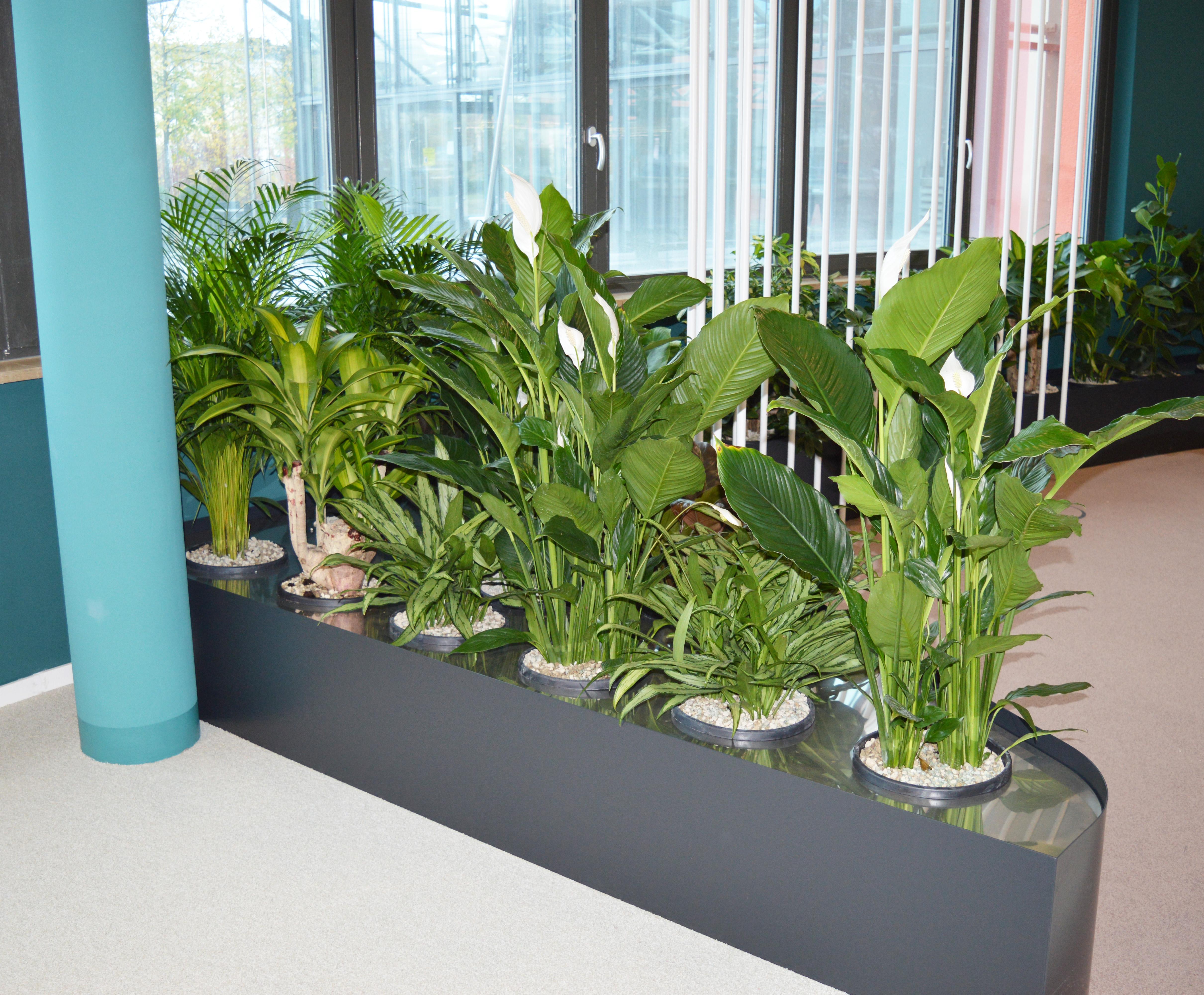 Becken mit Rastersystem bepflanzt innen 10