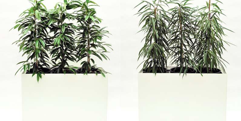 Prestige Rechteck 120 x 40 cm Pflanzgefäß bepflanzt mieten