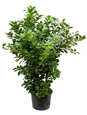 Pflanzen Raritäten