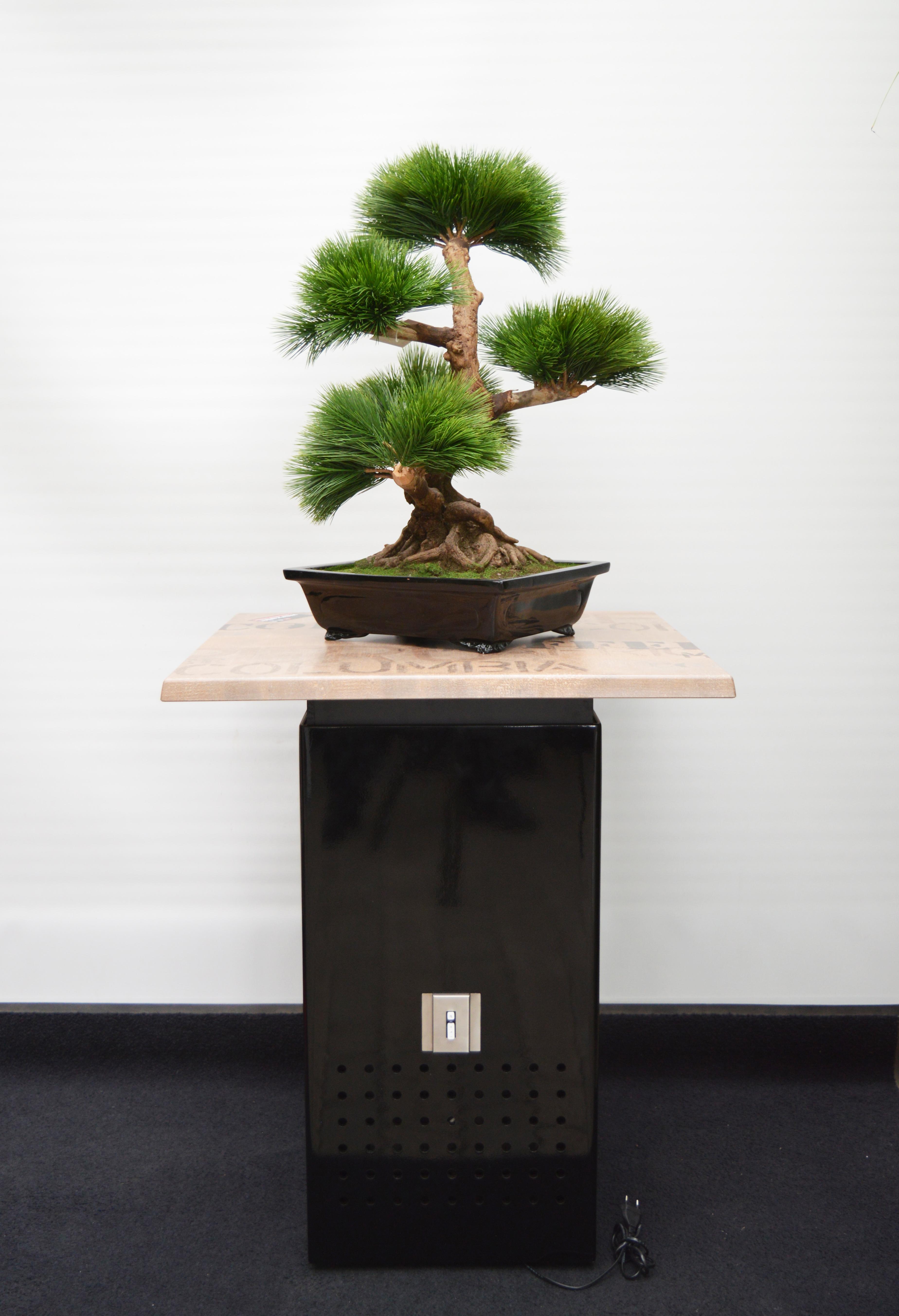 MM Box schwarz hochglanz mit Platte coffee und Bonsai 2