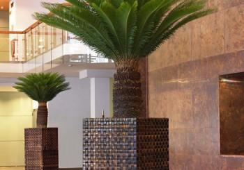 Hydrokulturpflanzen zimmerpflanzen erdpflanzen freilandpflanzen raumteiler gr ne w nde - Ausgefallene zimmerpflanzen ...