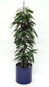 Pflanzenarrangement_Elegance RD 37 01