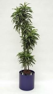 Pflanzenarrangement_Elegance RD 37 02