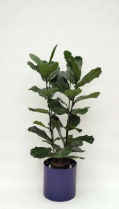 Pflanzenarrangement_Elegance RD 37 03