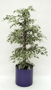 Pflanzenarrangement_Elegance RD 37 04