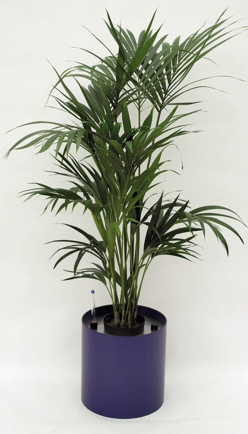 Pflanzenarrangement_Elegance RD 37 06