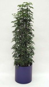 Pflanzenarrangement_Elegance RD 37 07
