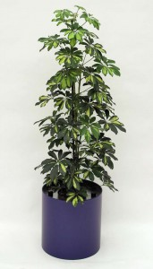 Pflanzenarrangement_Elegance RD 37 08