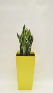 Pflanzenarrangement_Promo QU 40 07