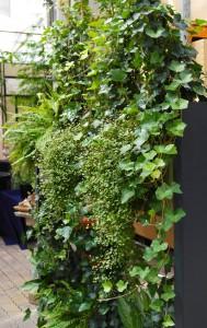 Raumteiler und Grüne Wände