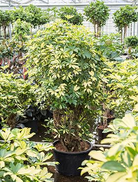 ausgefallene pflanzen rarit ten an pflanzen