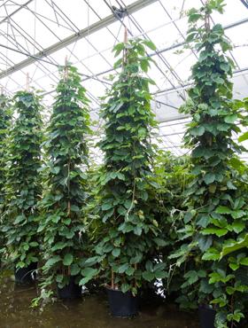 Ausgefallene Pflanzen Raritaten An Pflanzen