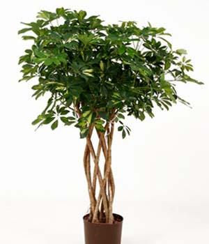 Moderne Grünpflanzen weshalb begrünungen wichtig sind pflanzen mieten