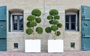 Pflanzenarrangements mit Freilandpflanzen