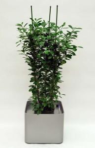 Pflanzenarrangements mit Hydrokulturpflanzen