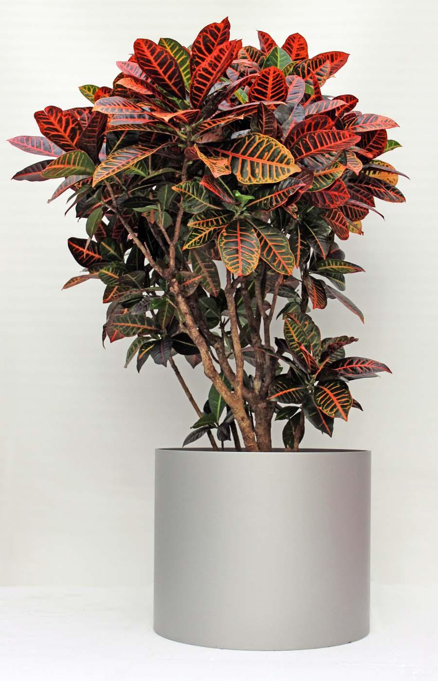 pflanzenarrangements mit hydrokulturpflanzen pflanzen mieten. Black Bedroom Furniture Sets. Home Design Ideas