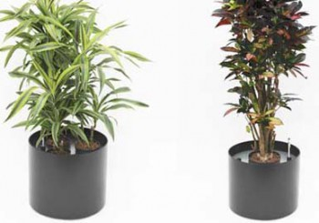 Mietangebot Büropflanzen