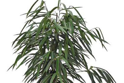 Pflanzenarrangements kaufen im Angebot