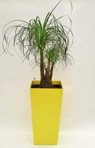 Pflanzen mieten oder kaufen