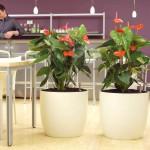 Chamäleon RD 60 mit Erdpflanzen im HPL-System