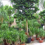 Pflanzenarrangements mit Erdpflanzen