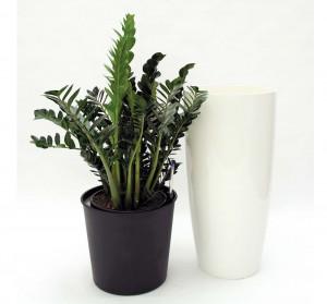 Kunststoffeinsatz mit Zimmerpflanzen Erde
