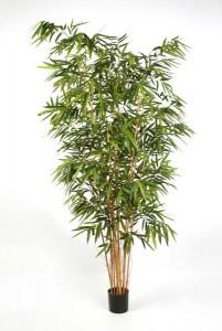 Bambus Textilpflanzen