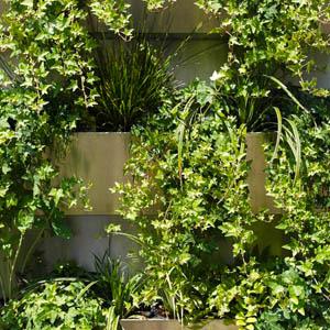 Grüne Wand_von W.M. Plattner Design_Freilandpflanzen