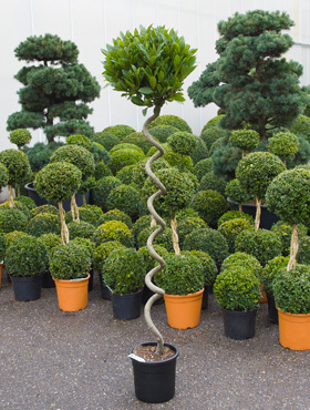 Freilandpflanzen und Mediterrane Pflanzen bis 50 cm Topfgröße