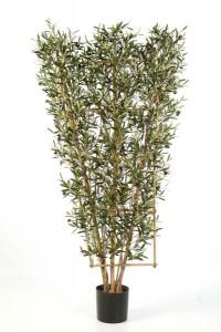 Olivenbäume 02