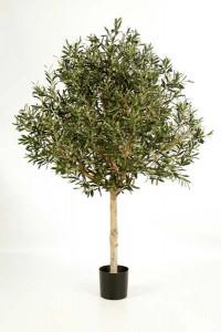 Olivenbäume 04