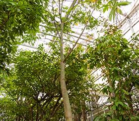 Zimmerpflanzen in Erde von A bis F