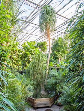 Zimmerpflanzen in Erde von G bis Z