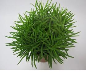 Zimmerpflanzen Erdpflanzen im Kulturtopf RD 10 bis 15 cm