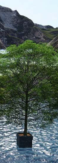 Baum-im-See